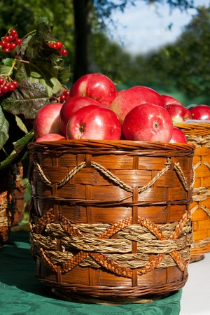 basket of fresh red apples outdoor on the table on holiday of harvest