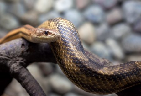 snake on the branch and stones in city zoo  photo
