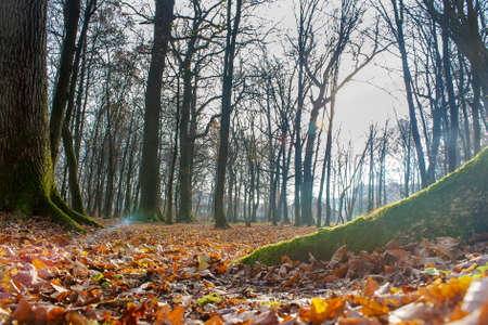 tree covered with green moss in autumn forest on sunny day Stock Photo