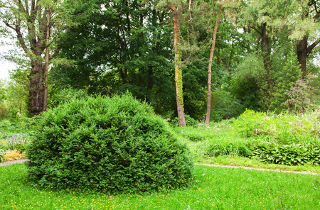 woodland scenery: woodland scenery on summer day