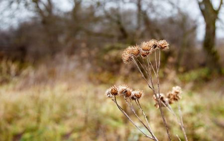 stem dried high grass on gloomy cold late autumn day closeup Stock Photo