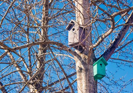 two wooden brown and green birdhouses on a tree in the spring closeup