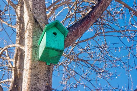 wooden green birdhouse on a tree in the spring closeup Stock Photo