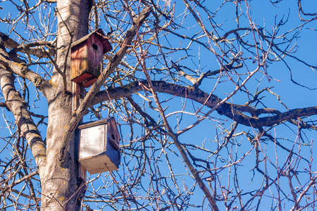 two wooden brown birdhouses on a tree in the spring