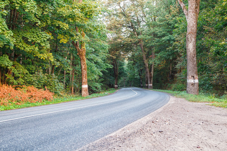 new asphalt road in the forest on summer sunrise