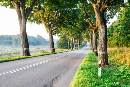 new asphalt road in the forest on summer foggy sunrise Stock Photo
