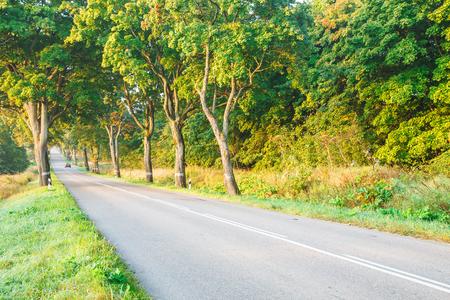new asphalt road in the forest on summer foggy sunrise Banco de Imagens