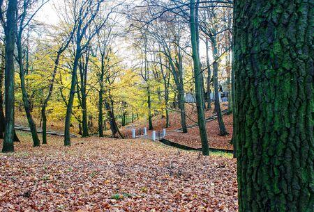city central park in gloomy autumn day Reklamní fotografie