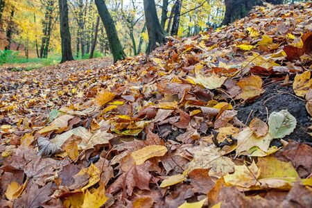 fallen leaves in the forest on gloomy autumn day closeup