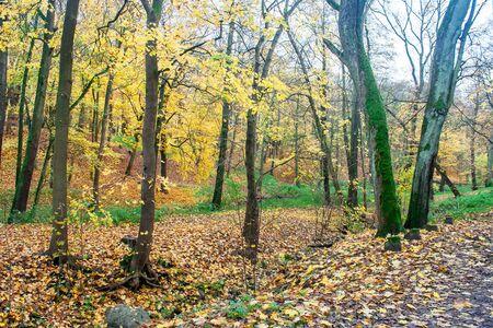 forest landscape on bright sunny autumn day Reklamní fotografie