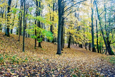 beautiful forest landscape on gloomy autumn day