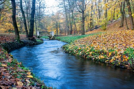 flowing creek in the forest on gloomy autumn day Reklamní fotografie
