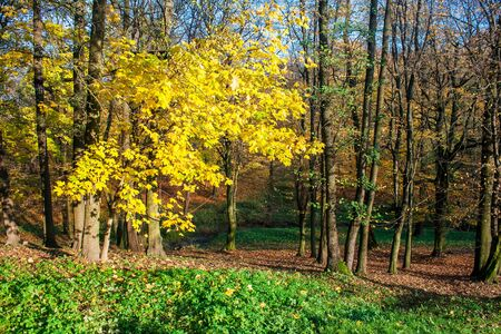 beautiful forest landscape on bright sunny autumn day