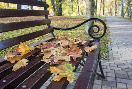 yellow maple leaves lying on a park bench on sunny autumn day