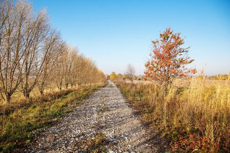 old dirt road in a field on a sunny bright autumn day Standard-Bild - 128102522