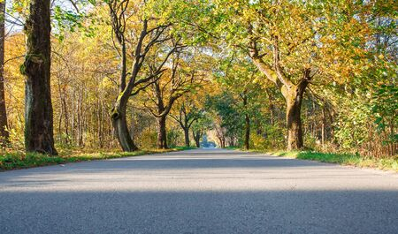 new modern asphalt road in the forest on sunny autumn morning