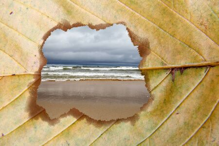 stormy seascape seen through a hole in a yellow dry leaf on autumn day