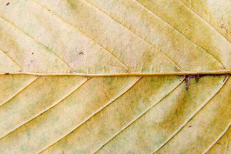bright yellow dry leaf surface outdoor closeup