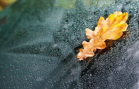 yellow oak leaf on wet glass of a car closeup outdoor on rainy autumn day Stock Photo