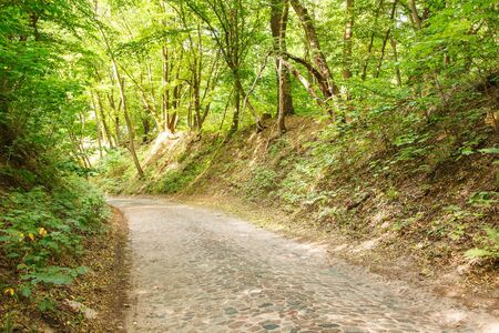 old paved road in the forest on sunny summer day