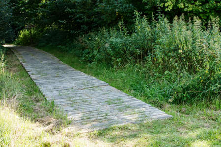 old wooden path in the park on bright sunny summer day