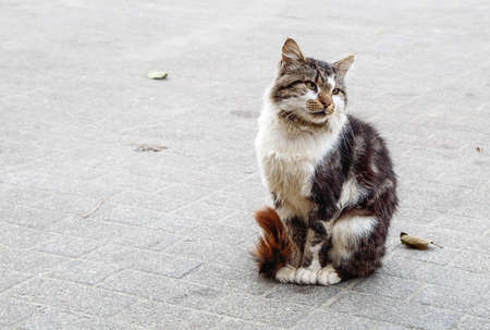 homeless lonely tricolor cat sitting on the sidewalk on autumn day. closeup outdoor Standard-Bild
