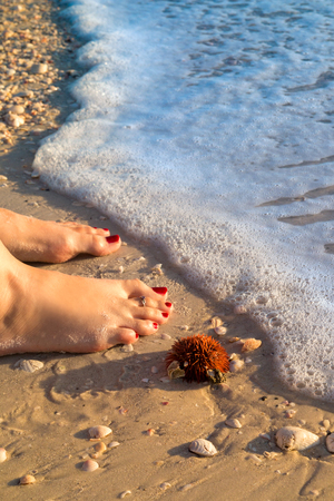 Woman barefoot standing on sandy beach next sea urchin and marine sea shells washed out from ocean waters during low tide