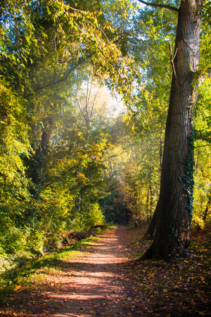 Pathway in the natural forest in October, Stock Photo