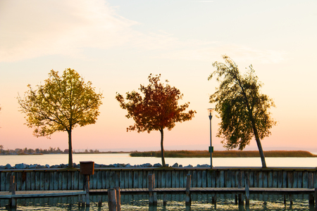 Three colourful trees above water with autumn leaves yellow, red and green, growing on the pier walkway, warm evening sky and lake on background Stock Photo