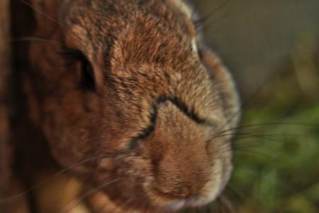comp: head rabbit