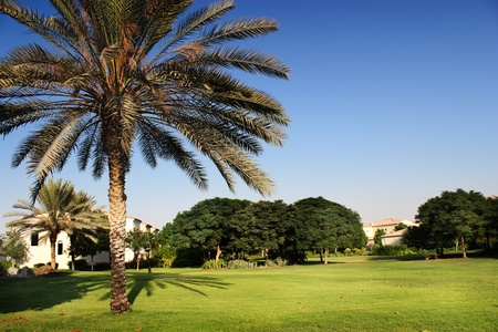 palm tree in the villa comunity garden with clear blue sky Editorial