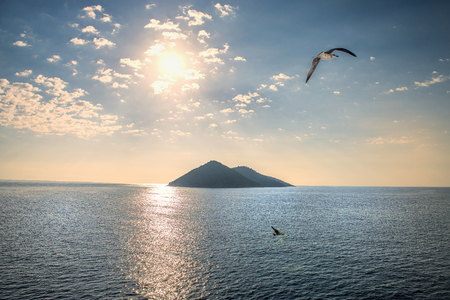 bird flying over island Stock Photo
