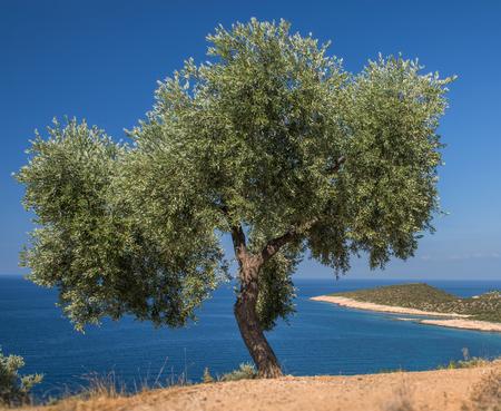 Tree on the sea island Stock Photo