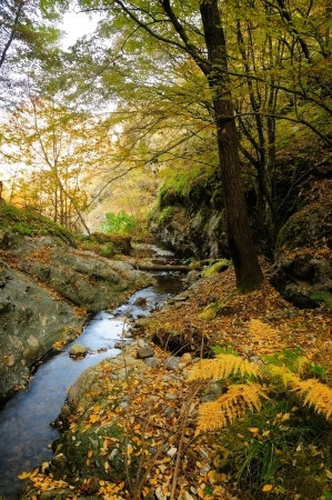 Autumn tree near a mountain river Stock Photo - 16452369