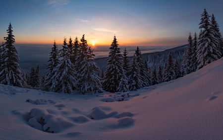 Winter sunset snow field with frosty pine trees on the background of taiga forest and hills under colorful sky.