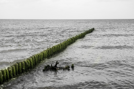 close p: Old wooden breakwater with green seaweed on the top Stock Photo
