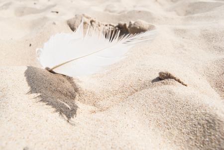 Small bird feather on sandy beach