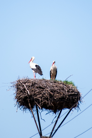 Storks sitting in nest