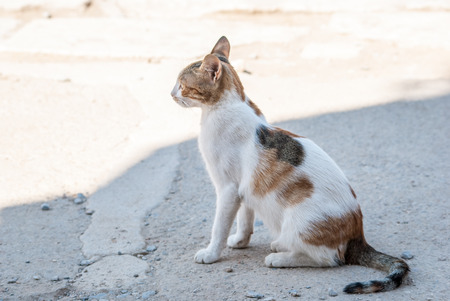 whiskar: Closeup of a cat