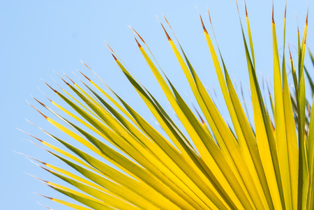 Palm closeup