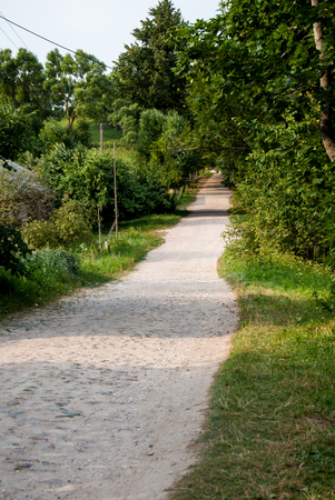 Forest pathway in spring