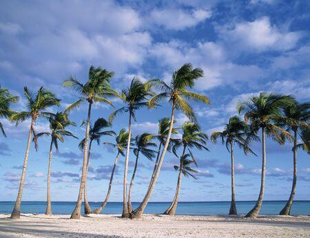 dominican republic: beach, punta cana, dominican republic