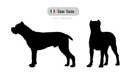 Dog breed Cane Corso  Side and front view silhouettes isolated on white background.
