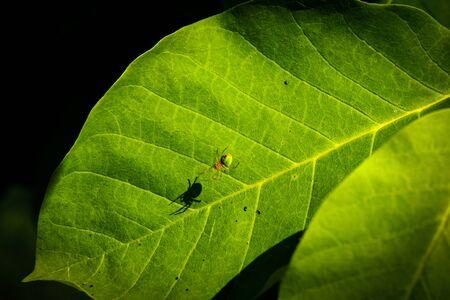 Green spider on a tree leaf, garden pests, insects Reklamní fotografie