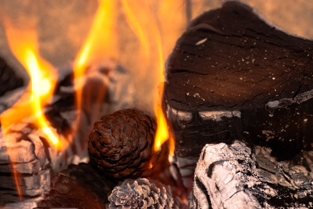Burning Wood and Cones photo