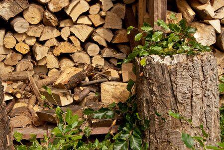 Bäume beschnitten, Logs und Stump Standard-Bild
