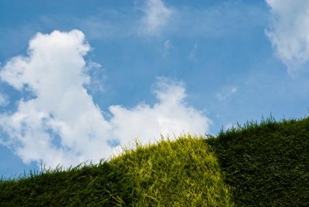 Geneigte Ansicht eines Hedge