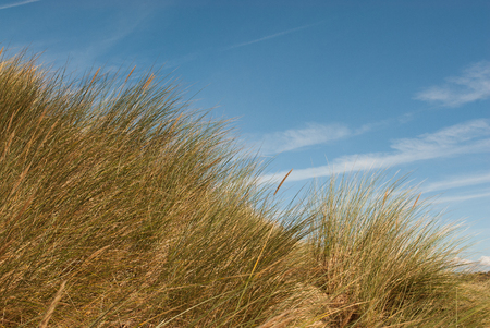 seascape image of grass reeds growing on sand dunes, shot against the sky Stock Photo
