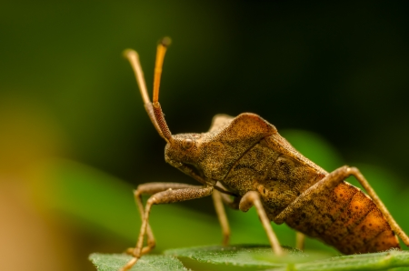 Extreme Macro Photo Of A Shield Bug photo