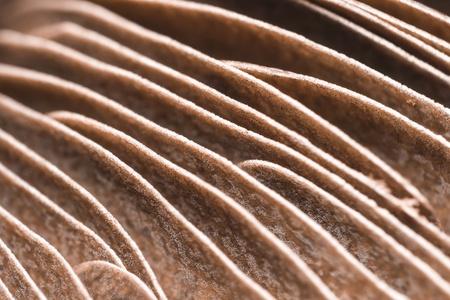 gills: Extreme Macro Photo Of Mushroom Gills